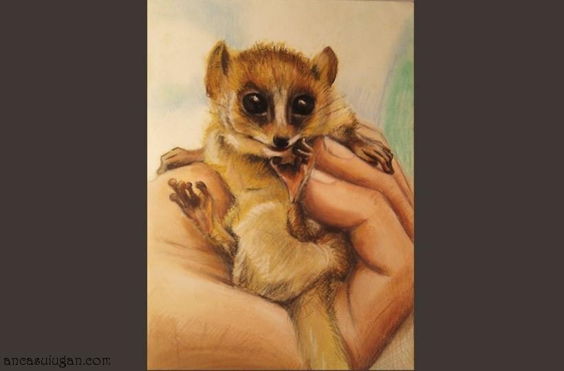 pui-de-lemur